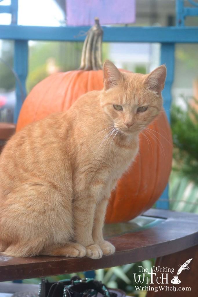 outdoor cat with a pumpkin