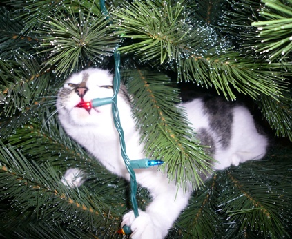 treecat2