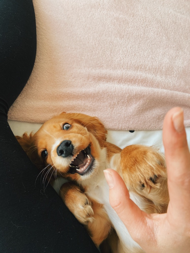 puppy-teeth