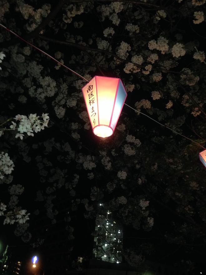 南区桜まつりのぼんぼり