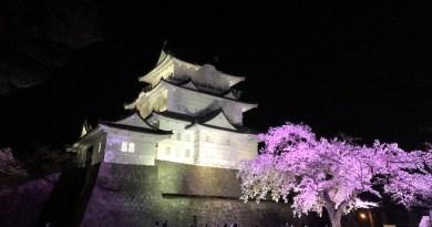 小田原城と夜桜