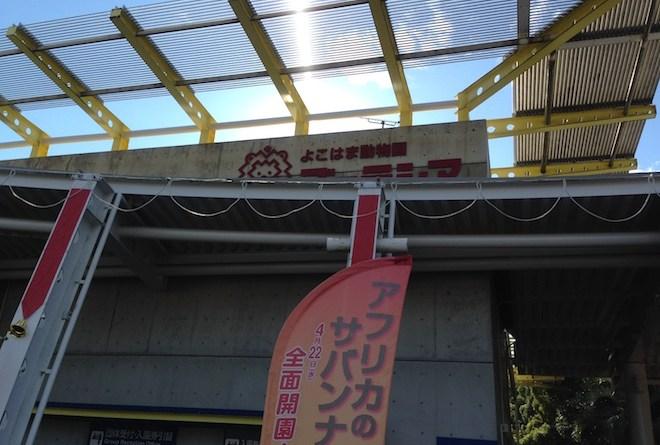 zoorasia-yokohama-zoological-gardens1