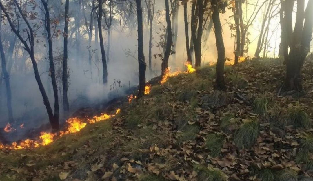 No habrá cambios al uso de suelo de zonas afectadas por incendios: Seder   Guadalajara   W Radio Mexico