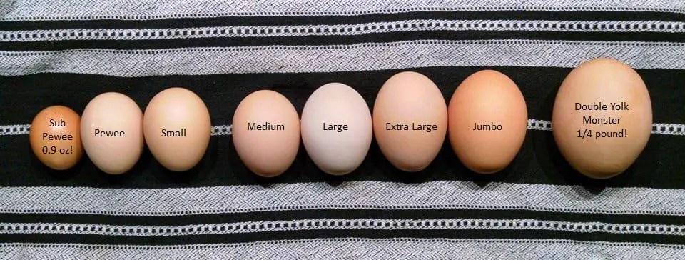 Egg Sizes Labeled