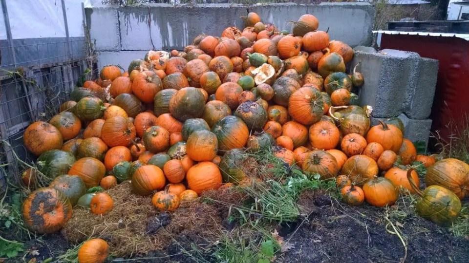 pumpkin-pile