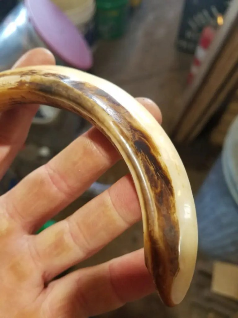 Boar Tusk Stains