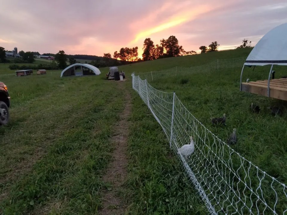Poultry Housing Sunset