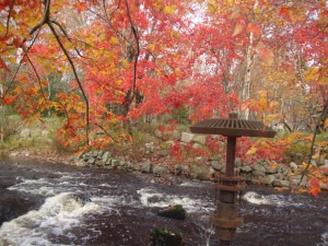 Maple leaves over Nine Mile River, by Raymond Harnish