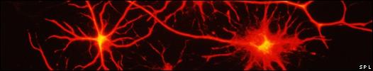 Células cerebrales