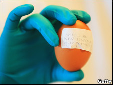 Huevo contaminado en Alemania