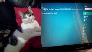Gato y Windows 8