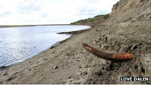 huesos de mamut en isla
