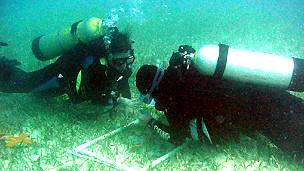 Pradera marina en la costa de Florida