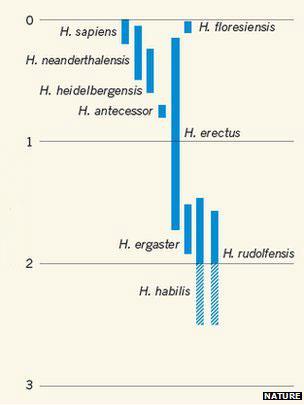 Gráfico del linaje humano