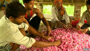 Trabalhadores na Índia fazem attar