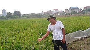 Nông dân Lê Văn Dũng