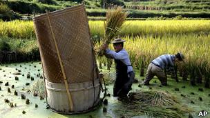 Camponeses na China (Foto: AP)
