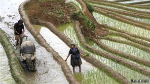 Nông dân người Hmong
