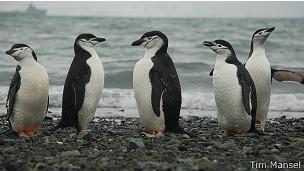 Pingüinos en Antártica