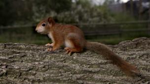 esquilo | Foto: BBC