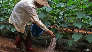 Mujer echando fertilizante
