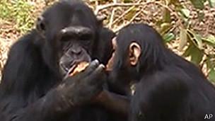 Monos comiendo