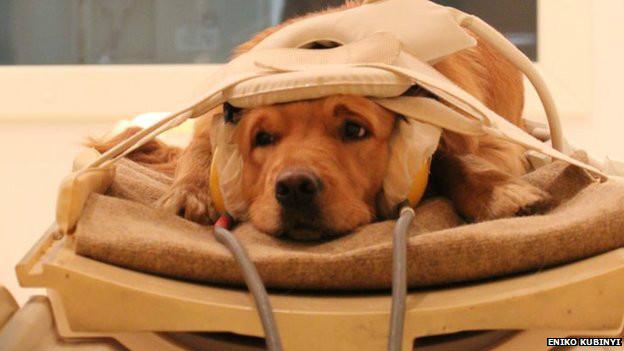 Cachorro em aparelho de ressonância magnética (Eniko Kubinyi)