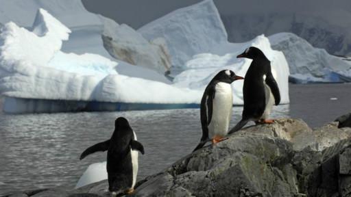 Pinguins (BBC)