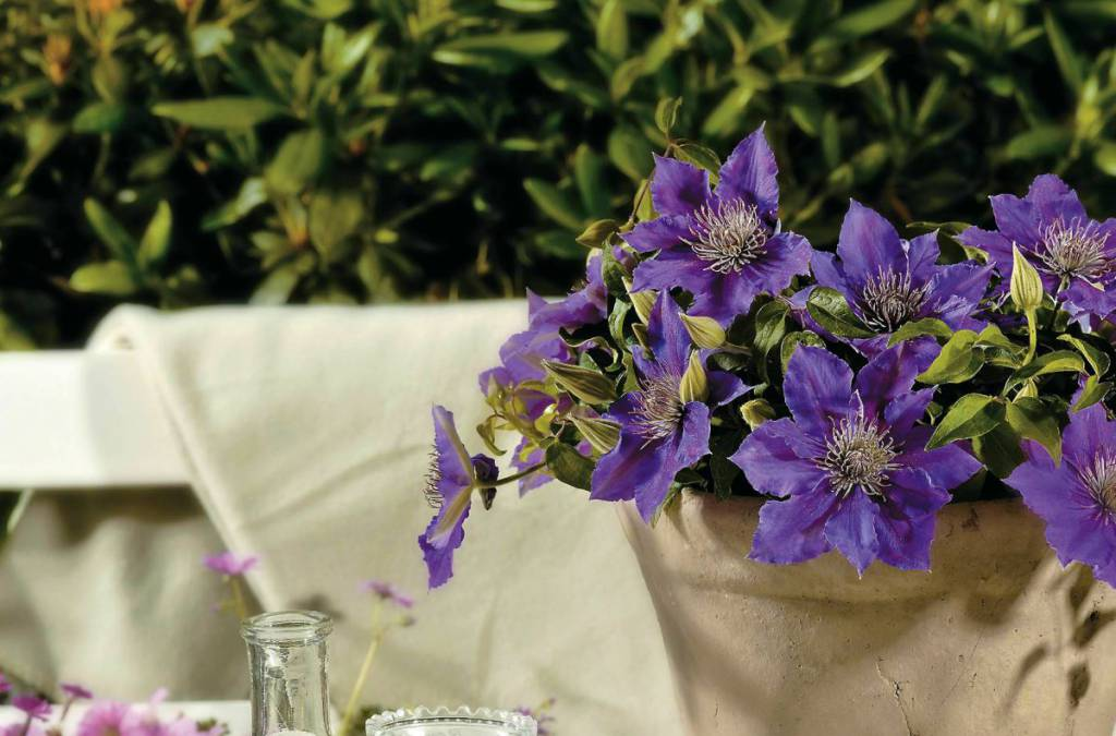 When Short On Garden Space, Grow Up With
