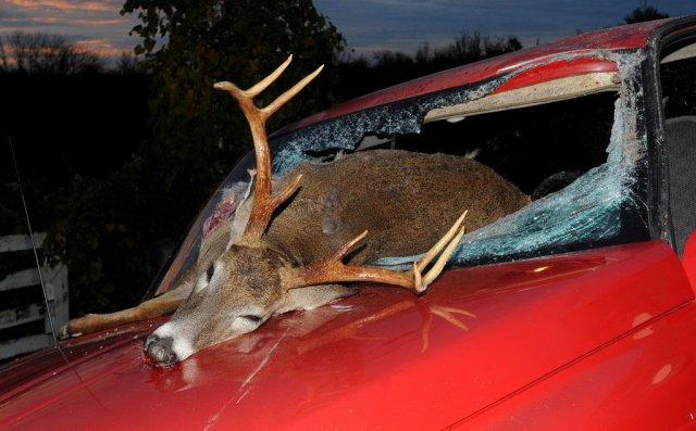 deer-accident-66bfa12507011c421