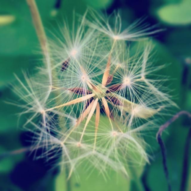 さわやかな季節の小さな瞬きが、胸に響きました。#green #flower #seeds #spring