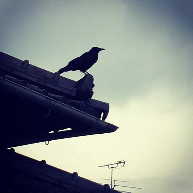 天気読み中。くんくん。#イマソラ #mysky #sky #gray #cloudy #cloud #rain #rainy #crow #roof