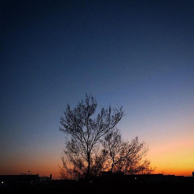 今年の〆はいい感じです。夕陽に会いに来たらなつかしい友に会いました。みなさん良い休日を。#イマソラ #mysky #sky #sunset #fine #tree #winter #december #2015