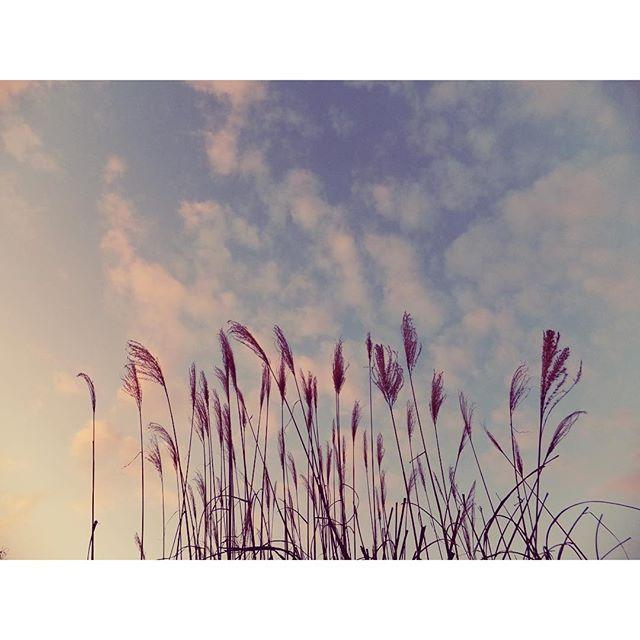 ひと息ついて。あたたかい今日は冬らしくない夕空。今日もお疲れさま。#イマソラ #mysky #sky #sunset #evening #japanese #silver #grass #susuki #warm #winter #2016
