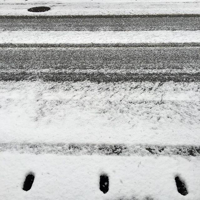 しんしんと静かな朝です。ここでは珍しい白い地面。まだ積もりそうですね。#イマソラ #mysky #snow #snowing #white #road #winter