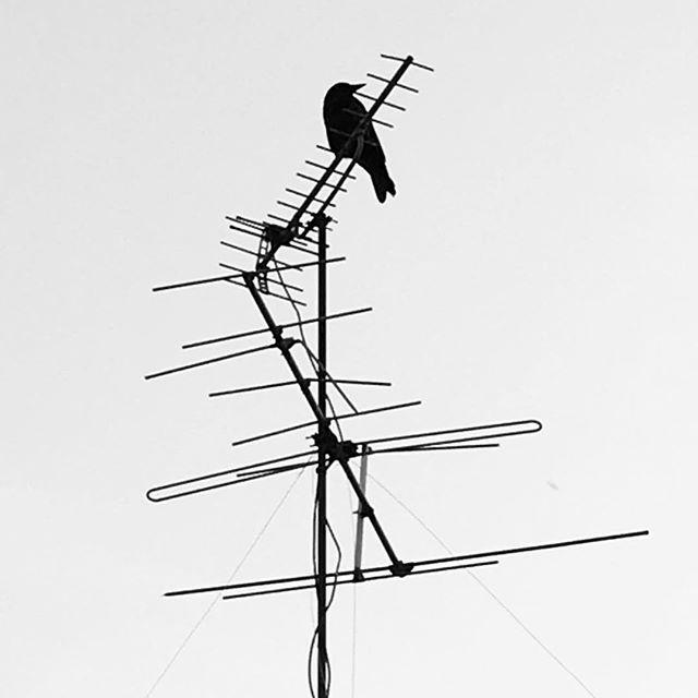 毎日ご苦労様です。#イマソラ #mysky #sky #fine #bird #crow #antenna #tv #bw #blackandwhite #black #shadow