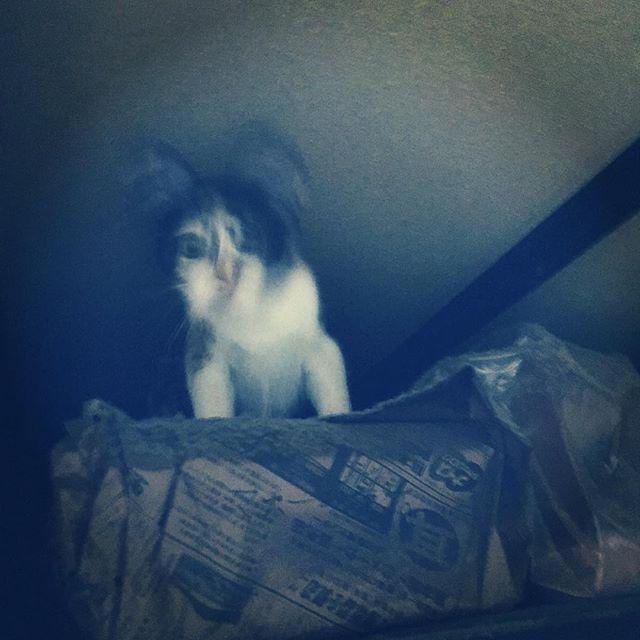 そこはやめてください…。#cat #kitty #ceiling #horror