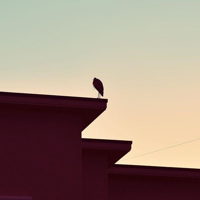 いつものひとです。気づかれて向こうを向かれてしまいました。そういえば満月は朝でしたし、どっちみち、今日は雲だらけで月は見えませんでした。忙しい今日は暮れ、明日は追い込みです。ガンバレ、明日。#イマソラ #mysky #sky #fine #sunset #bird #building #winter #february #2017