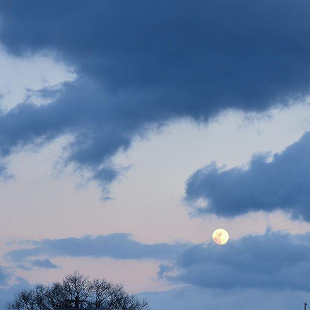 雪はあまり降りませんでしたが、満月でしたね🌝西に日は沈み、東から月が昇る所に出会えました。寒い今日、お疲れ様でした。またあした#イマソラ #mysky #sky #moon #fullmoon #sunset #evening #cloudy #coldday #coldwind #tree #winter #february #2017
