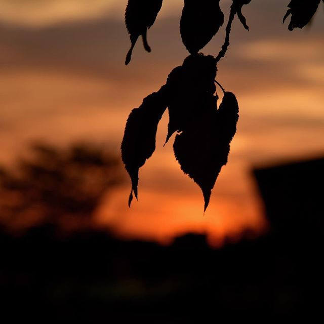 今日は家族の熱中症でバタバタして、夕方の撮影では足の悪い子猫に遭遇して、なんだかざわついた一日でした。猫にカリカリを持って行って、今になりました。明日も忙しい一日です。またね。 #イマソラ #mysky #sky #sunset #fine #orange #leaves #shadow #hotday #summer #august