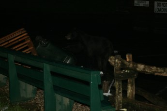 A bear decided to pay Deals Gap a visit!
