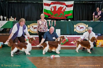 BEST DOG LINEUP: BD (centre) - Sh Ch GLENBROWS TRADEMARK JW. RBD (left) - KYLOWEN DRYM. BPD (right) - SARABANDE MAN IN THE MIRROR (AI). Welsh Springer Spaniel Club of South Wales Open Show 18-09-2016, held at Chepstow, Wales.