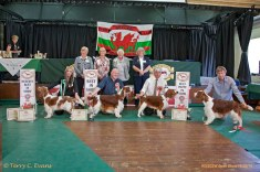 BIS LINEUP: BIS (centre) - Sh Ch GLENBROWS TRADEMARK JW. RBIS & BOS (left) - SLAPESTONES HEPBURN FOR BENOVEOR. BPIS (right) - SARABANDE MAN IN THE MIRROR (AI). BVP (far right) - PAMICKS DAZZLING BOY JW ShCM. Welsh Springer Spaniel Club of South Wales Open Show 18-09-2016, held at Chepstow, Wales.