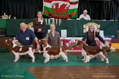 SPECIAL AWARDS LINEUP (left to right): J-DorB - GLENBROWS LIBERTY (Al). PG-DorB - JACRANELLA SOLO. OS-DorB - KAMUNTING CAST AWAY TO BENOVEOR JW. Welsh Springer Spaniel Club of South Wales Open Show 18-09-2016, held at Chepstow, Wales.