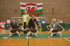Best Dog - TAIMERE'S TWISTER ROUND NYLIRAM JW ShCM; Reserve Best Dog - Sh Ch FERNDEL COMANDER OF BETHERSDEN; Best Puppy Dog - JULITA RUTLAND. Welsh Springer Spaniel Club of South Wales Championship Show 26-03-2016, held at Chepstow, Wales.