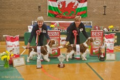 Best in Show - Taimere's Twister Round Nyliram JW ShCm; Res Best in Show - Taimere's Two Step. Welsh Springer Spaniel Club of South Wales Championship Show 26-03-2016, held at Chepstow, Wales.
