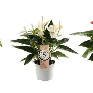 Planten die bloeien