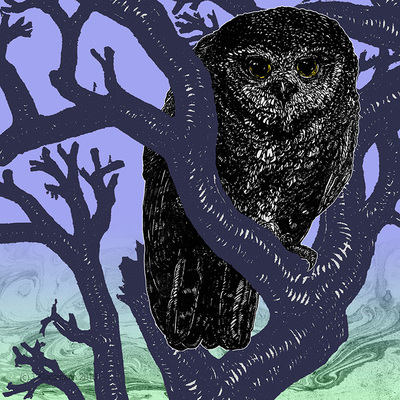 """Owl"" Digital collage, 12""x12"", 2016. Tate Klacsmann"