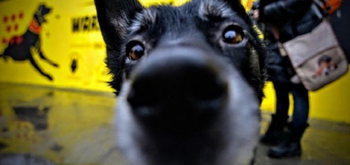 Bezpłatne czipowanie psów i kotów znów w Warszawie