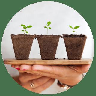 Small plants nurtured